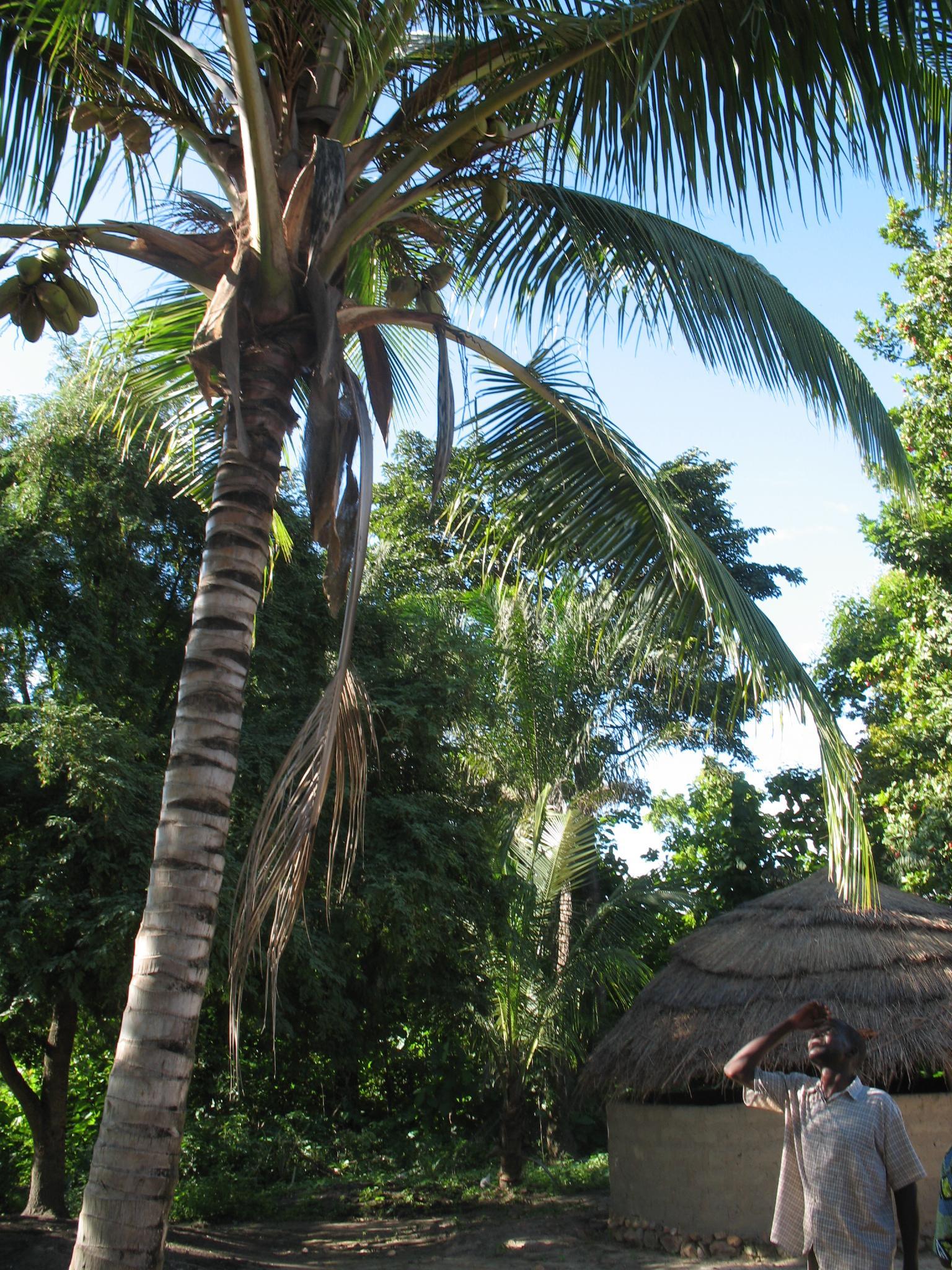 palmier accueil